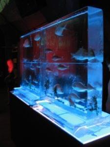 Aquarium, Fish, Seafood, Wall