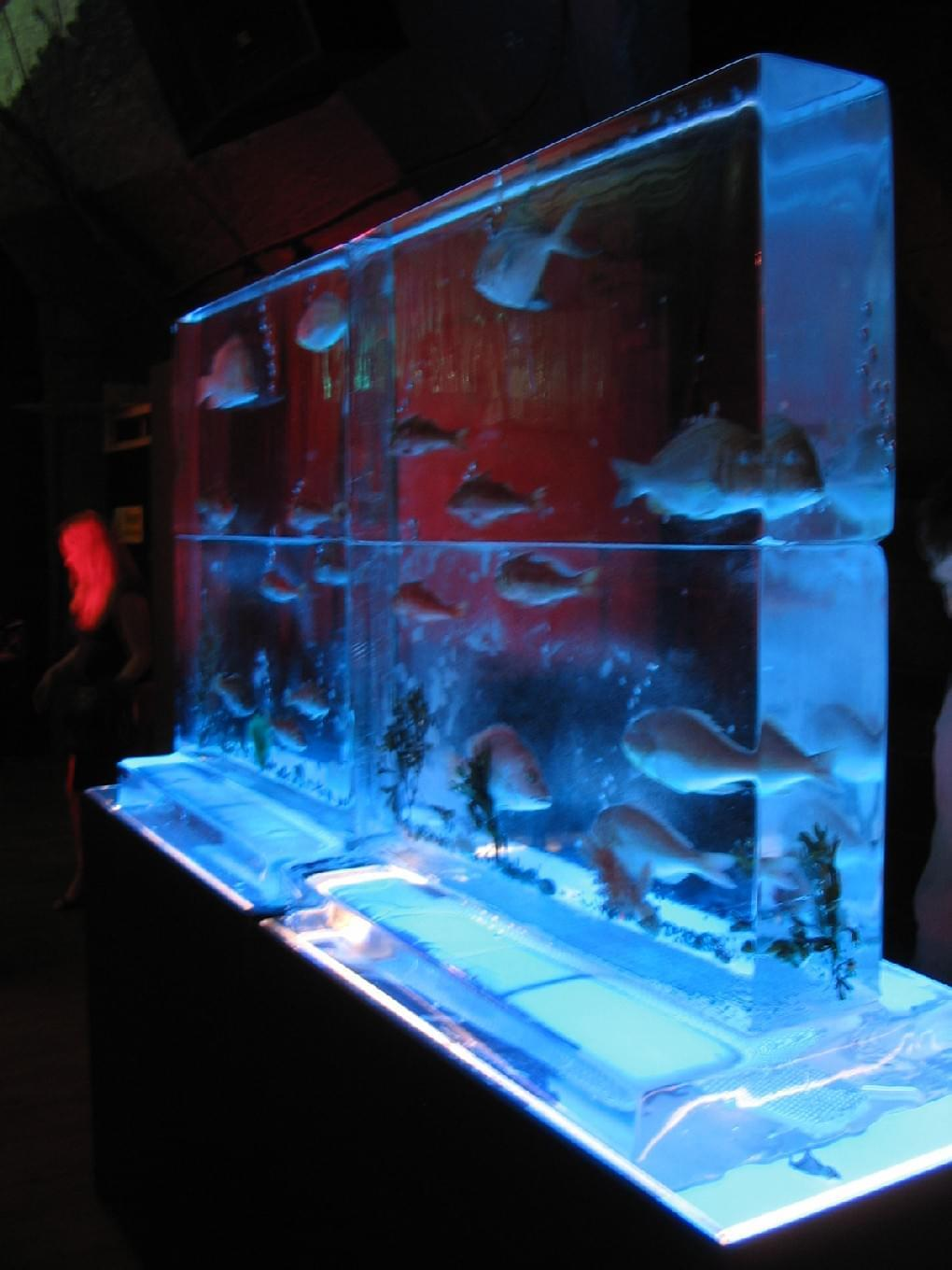 Aquarium, Fish, Seafood, Wall