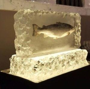 Product launch, Salmon, Frozen in ice