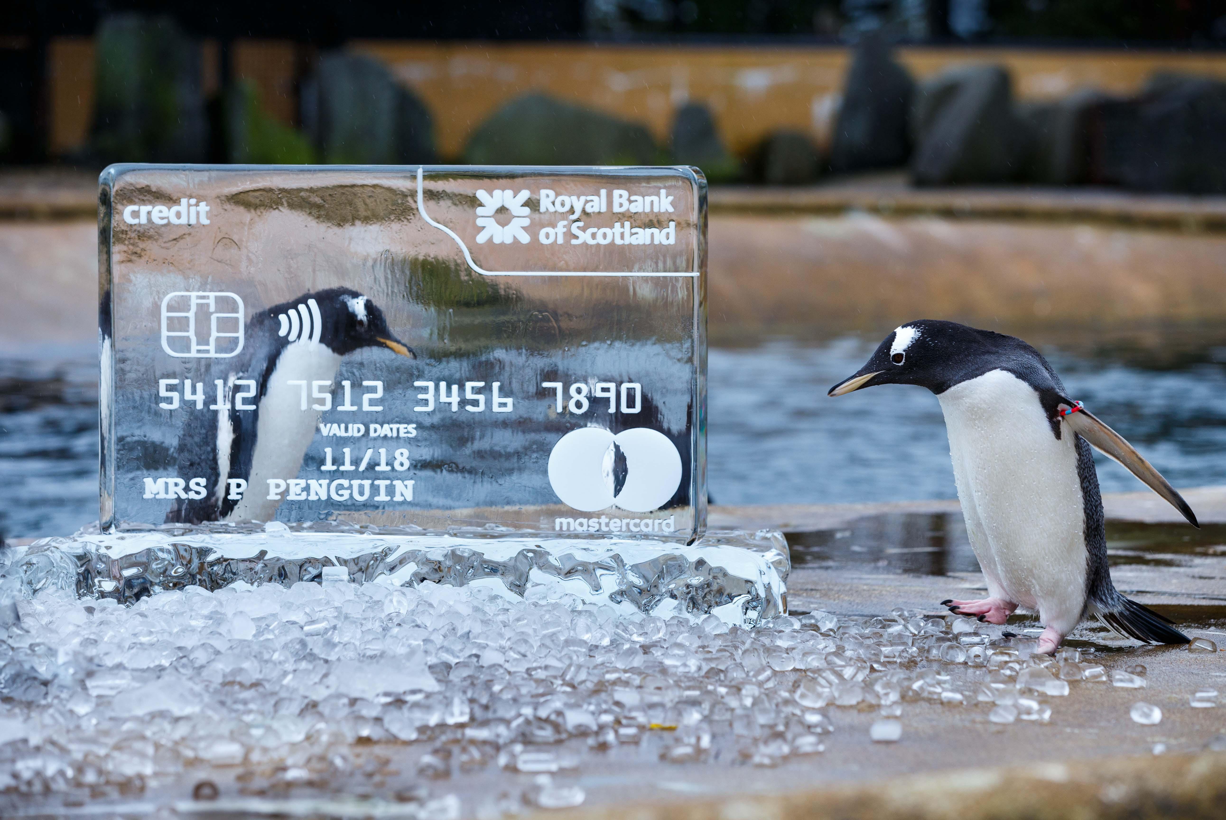 RBS Credit card logos - Edinburgh Zoo